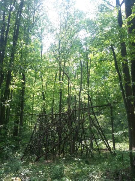 forest art